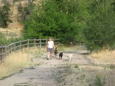 Woman walking on trail with three dogs on leashes. Trail is bordered by tall grasses on one side and wooden fence on the other.