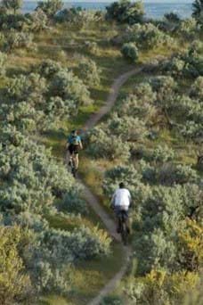 Two mountain bikers head up a small dirt trail surrounded by greenery