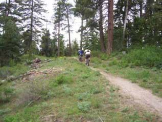 Mountain bikers head out a dirt trail surrounded by grass and large pine trees.